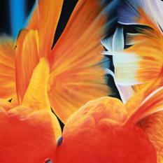 Gold Fish Painting 80cm x 120cm